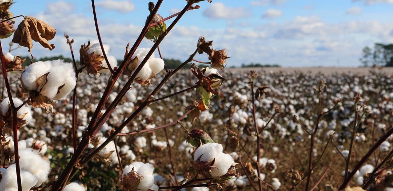 Quelles sont les qualités du coton ?