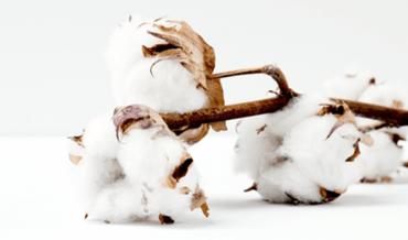 Les utilisations du coton