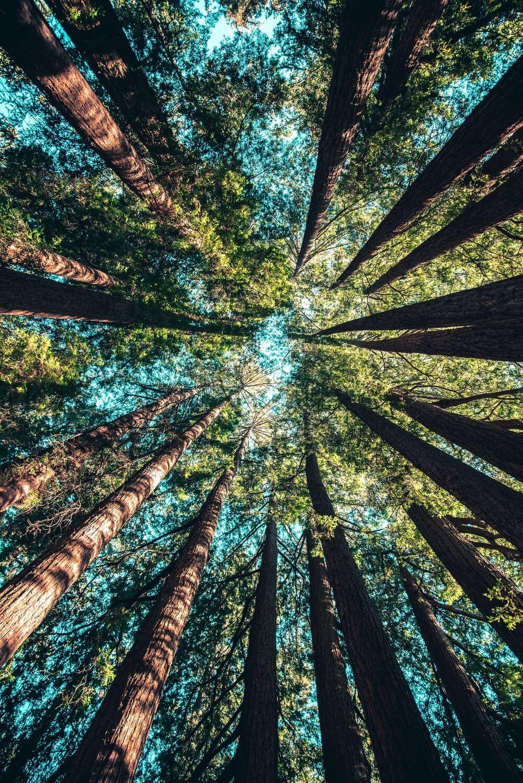 Des bois protégés