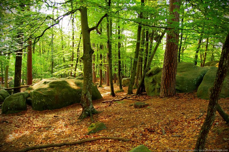 bois-de-hêtre-landscape